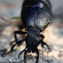 Hamam Böceklerinden Kurtulmanın 4 Yolu